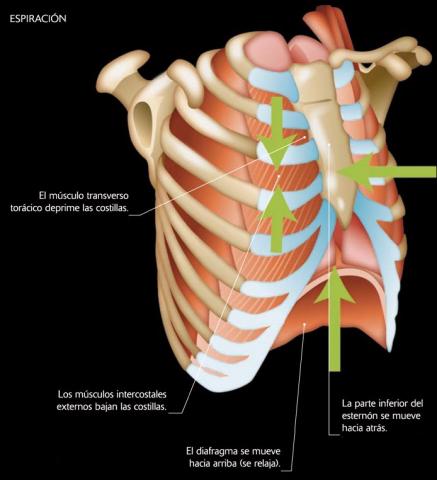 imagen sobre la espiración para la web de Rodrigo Guadián sobre Osteopatía y Pilates en Alcalá de Henares