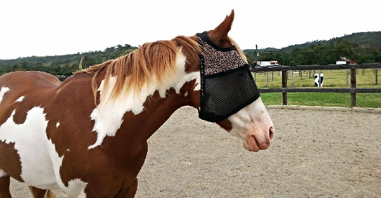 Recommended by the Equine Cancer Society