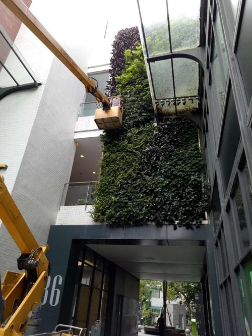 绿化墙项目