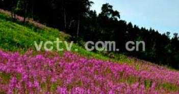 围场满族蒙古族自治县森林公安局招录警务辅助人员招录简章