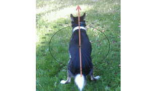 dogs defecating research