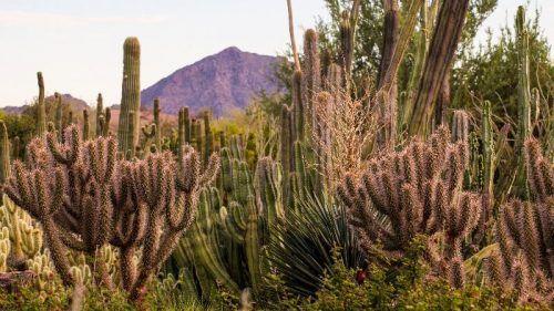 cactus scenery