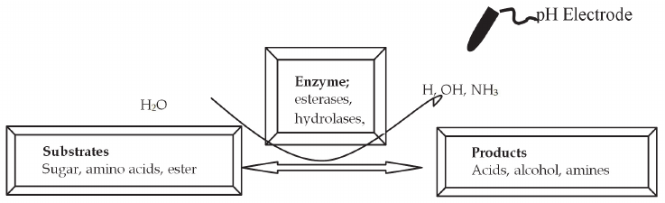 Principle of working of a potentiometric sensor for the analysis of amino acids, sugars and esters. The enzymes are immobilized at the pH-electrode surface and the change in pH caused due to enzymatic conversion of the substrate is recorded, which is proportional to analyte concentration.