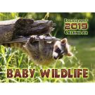 Baby Wildlife 2019 Wall Calendar