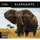 Elephants NG 2020 Wall Calendar