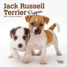 Jack Russell Terrier Puppies 2019 Mini Wall Calendar