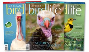 birdlife_african