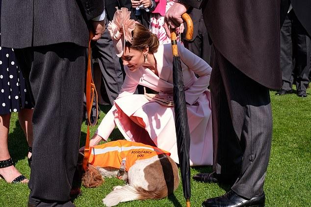 He even met the Duchess of Cambridge, who immediately bent down, despite her pink Alexander McQueen suit, to stroke his tummy