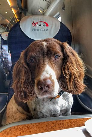 Max in a first class seat on train to Buckingham palace
