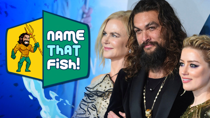 Aquaman Name That Fish