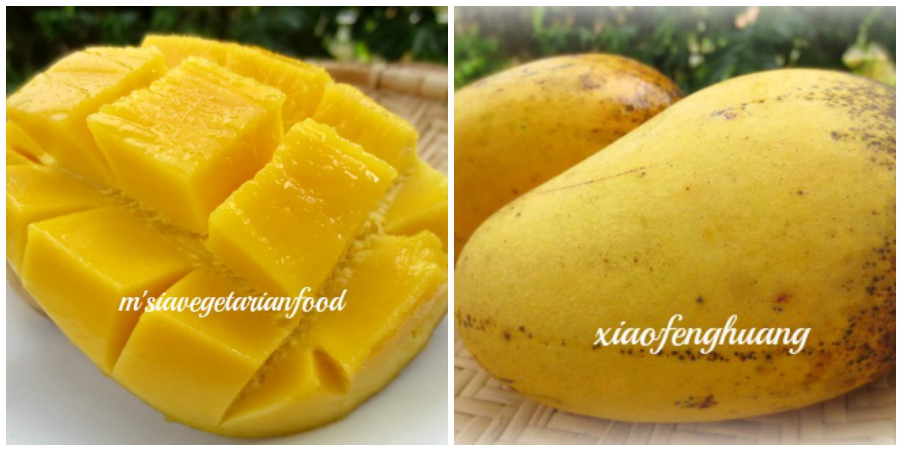Home grown mangoes
