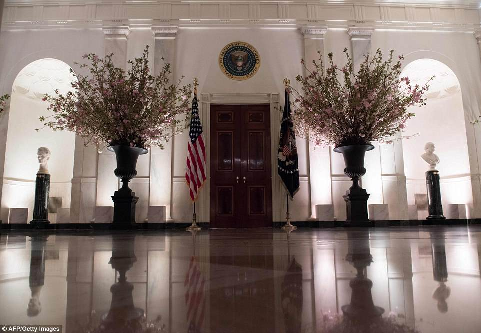 The White House's Cross Hall was decorated with giant vases of cherry blossoms, in preparation for tomorrow's state dinner with France