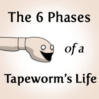 The 6 Phases of a Tapeworm's Life