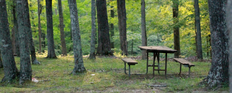 Shady campsite with picnic table. Cheap camping holidays for everyone to enjoy.