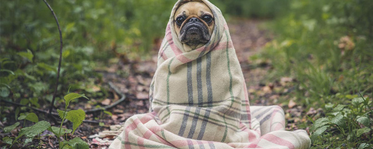 Dog wrapped in a blanket. Inexpensive camping trips use a minimum amount of gear.