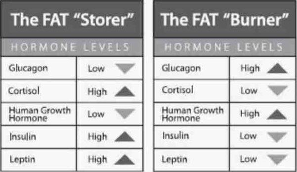 7 Fat Burning Hormones   Perfect Pulse