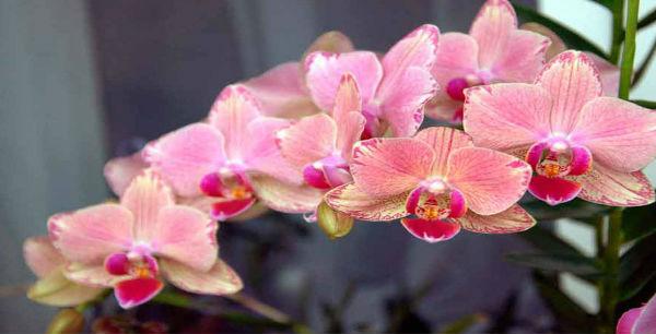 1200 630 kopirovat 385 1170x630 - Соблюдай эти 9 правил и твоя орхидея будет цвести круглый год