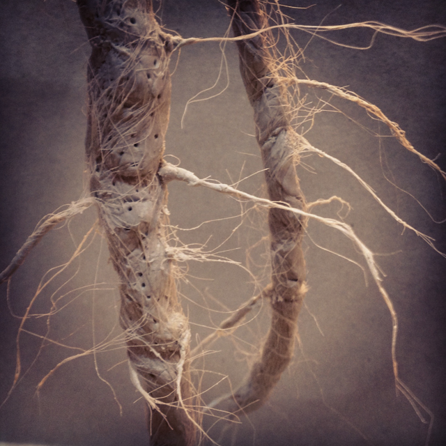 Roots up close.