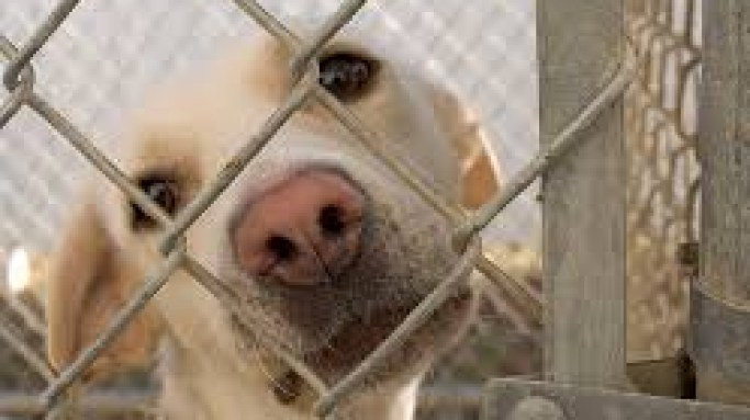 Get a pet from a shelter