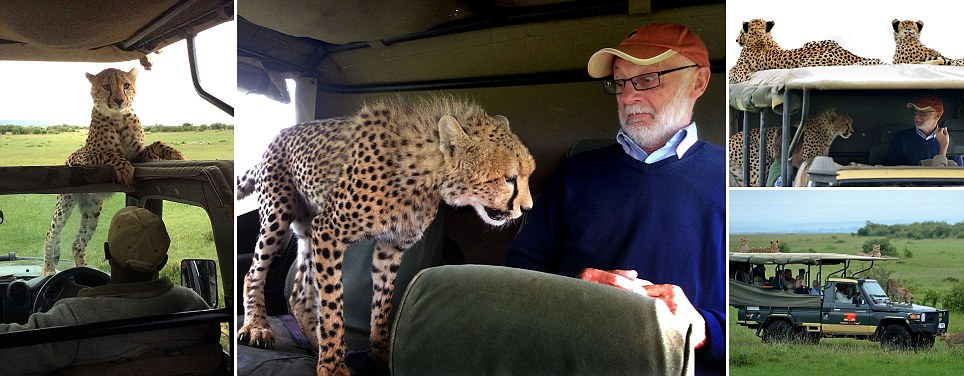 Kenya tourist comes face to face with cheetah who leaped into his jeep