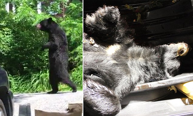 Hunter who shot Pedals the bear with a crossbow bolt to the chest after boasting of