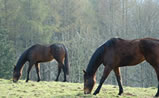 Racehorses at IHWT