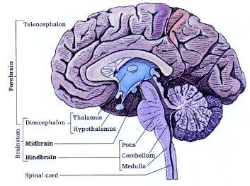 Brain-behavior Relations analysis methods