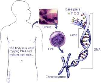 All our cells contain chromosomes, which are long strands of hereditary material (DNA).  There are only 4 different building blocks of DNA (called nucleic acids or bases): A, C, T & G. In each cell we have about 3 billion bases.  These determine the hereditary code because they code for all possible functions of our body.