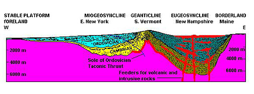 Cross-section through geosynclinal troughs, usually in pairs (Miogeosyncline; Eugeosyncline).