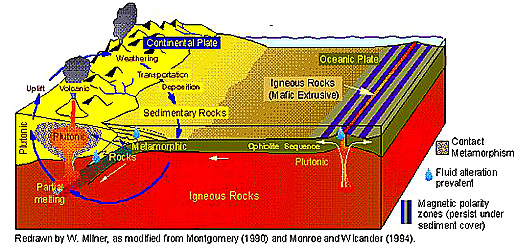 The rock cycle associated with a convergent plate boundary with a continent on one side.