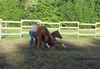 Laying down a horse