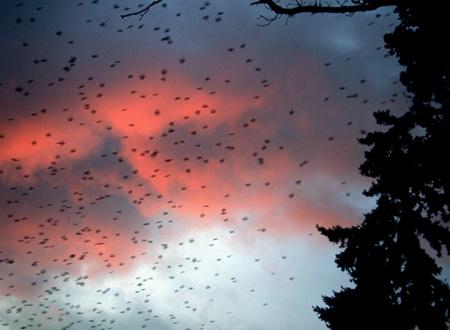 swallows1.jpg