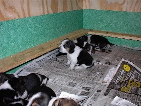 Inside of this whelping box once completed.