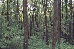 Black Snake Trail in Allegany State Park