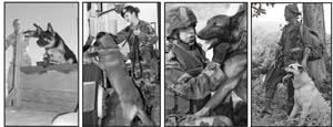 War Dogs Presentation
