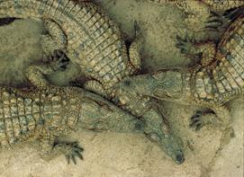 crocs.jpg