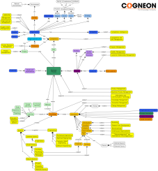 COGNEON-ConceptMap_-_Learning-Organization