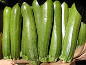 Elite Zucchini