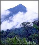 Mount Etinde, below the summit of Mt. Cameroon. The Etinde forest has the highest biodiversity in the Mt. Cameroon region