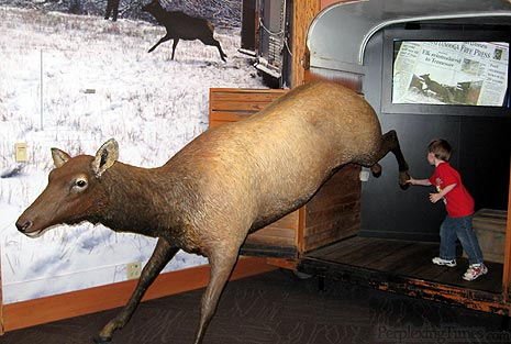 Elk jumping out of a trailer