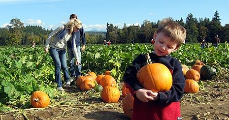 pumpkin patch near Seattle
