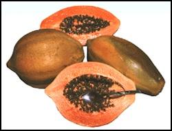 Tainung #1 papaya variety