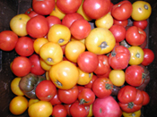 Mixed Tomato Varieties