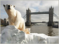 LONDON, ENGLAND - JANUARY 26:  A 16 foot high sculpture of a polar bear and cub, afloat on a small iceberg on the River Thames, passes in front of Tower Bridge  on January 26, 2009 in London, England. The sculpture was launched to provide a warning to members of parliament of the dangers of climate change and to launch a new natural history television channel.  (Photo by Oli Scarff/Getty Images)