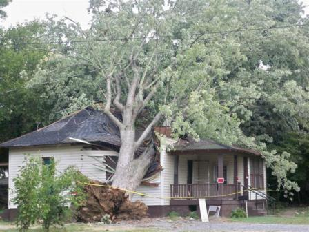 Photo of tree on house in Mayfield, KY