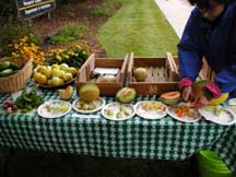 Melon tasting at the CSU Student Organic Market