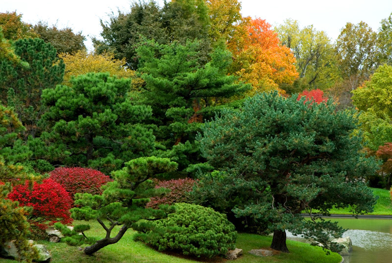 Missouri Botanical Garden: Burning Bush