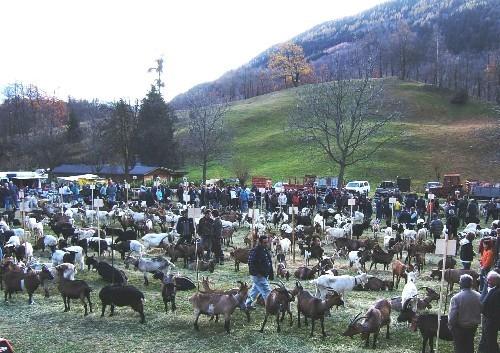 Mostra di capre alpine a Croveo