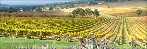 Australian Vineyard. Photo credit - Steve Lacy.