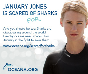 Sacred For Sharks